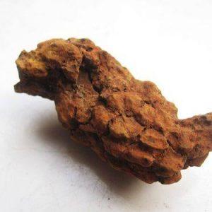 קופרולייט - מאובן צואה של דינוזאור