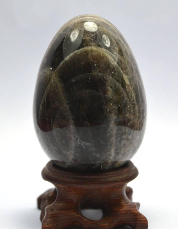 סנדלווד מדגסקר ביצה ומעמד משקל: 205 גרם