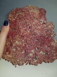 קורל טבעי איכותי (לא צבוע) גוון אדום משקל: 526 גרם